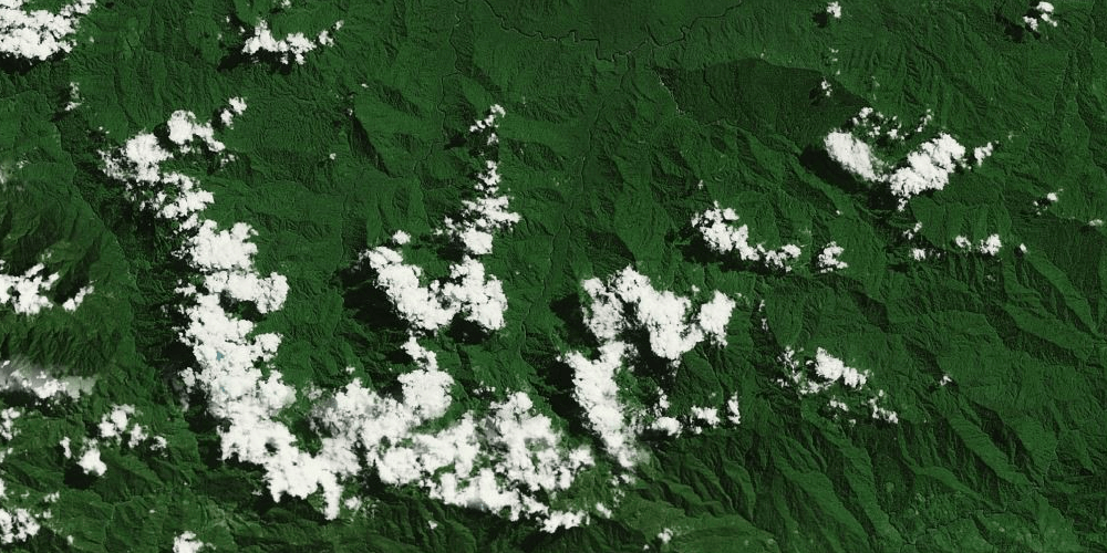 papua forest
